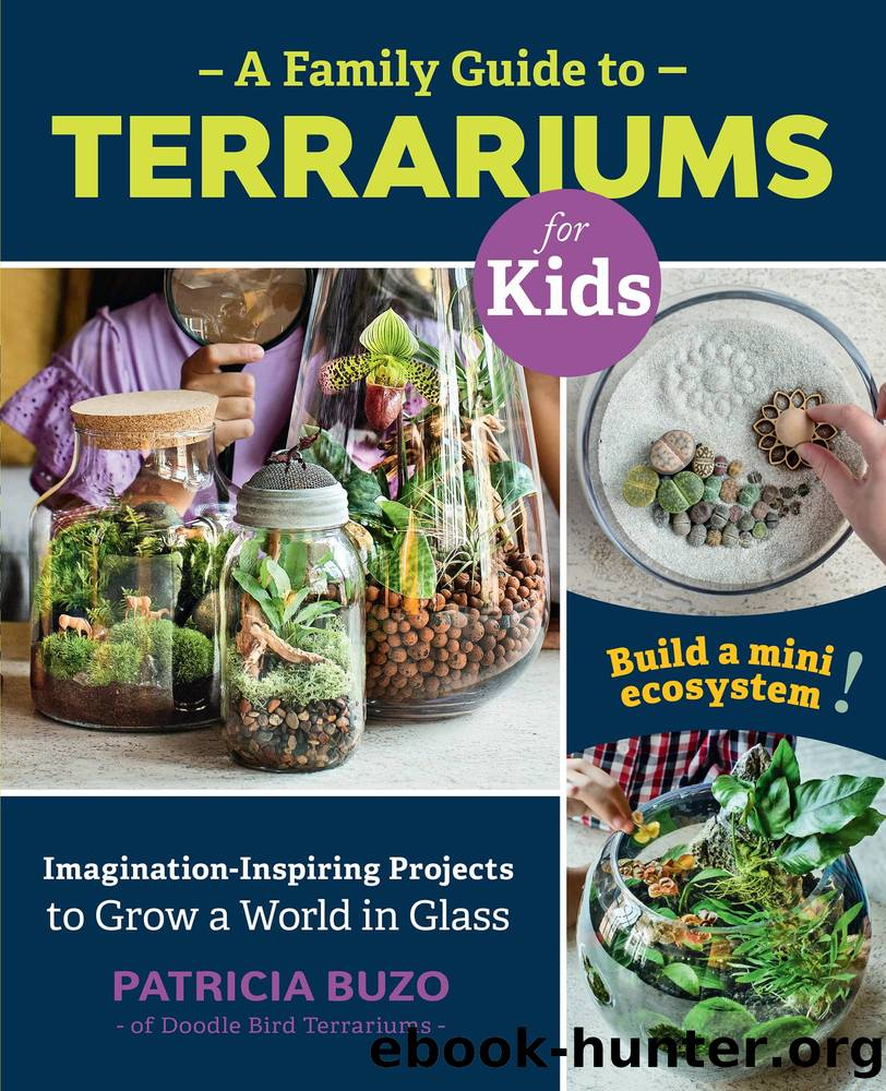 A Family Guide to Terrariums for Kids by Patricia Buzo