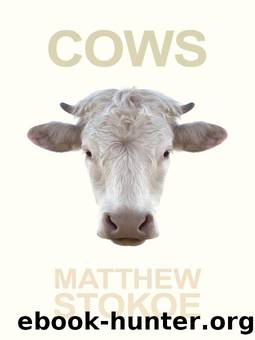 Cows by Matthew Stokoe & Dennis Cooper