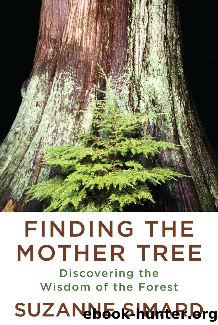 Finding the Mother Tree by Suzanne Simard
