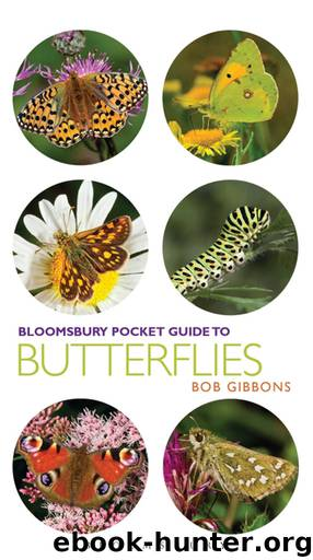 Pocket Guide to Butterflies by Bob Gibbons