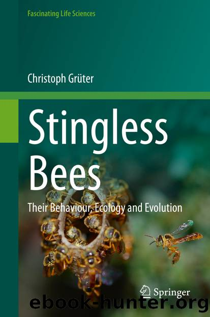 Stingless Bees by Christoph Grüter
